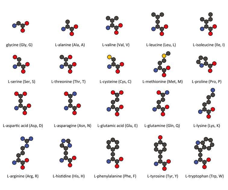 vorteile-von-whey-protein-aminosaeuren